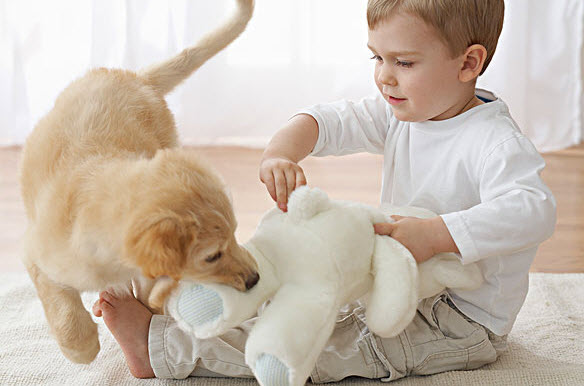 如何避免宠物伤害宝宝