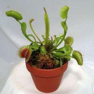 宝宝养动物植物