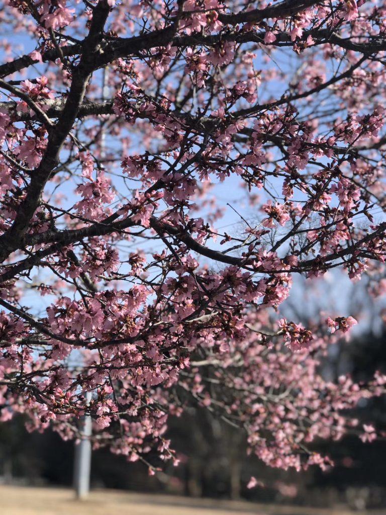 美国带娃春天种花