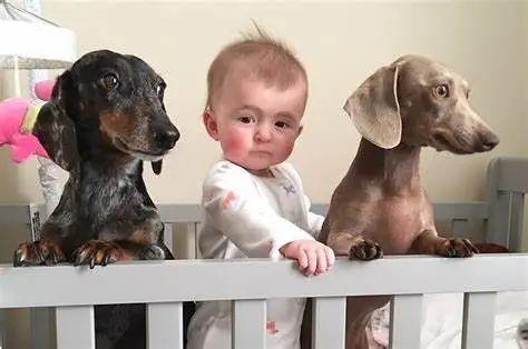 美国孕妇宝宝宠物安全