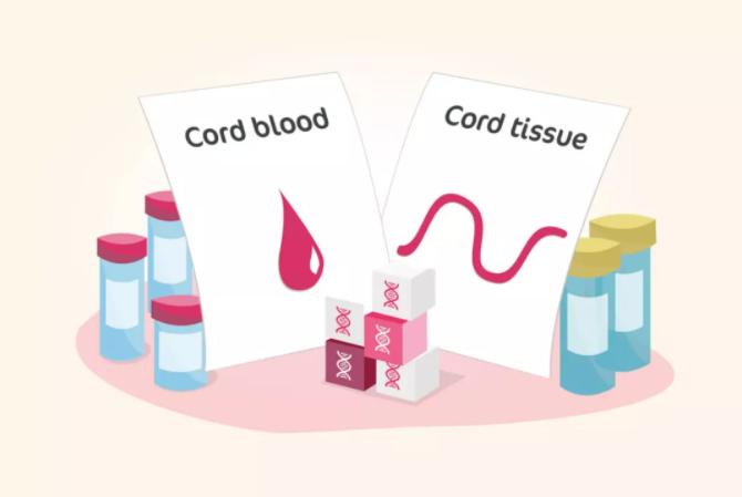 美国宝宝脐带血储存